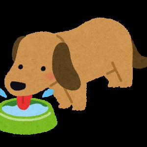犬にウォーターサーバーの水って与えていいの?