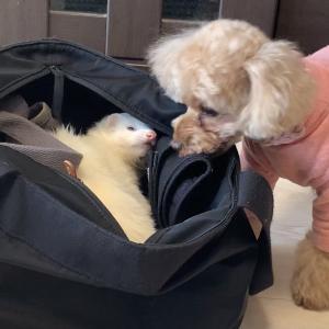 犬は人間の言葉を理解しているのか。あなたは信頼されていますか?