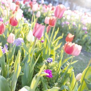 春よ、来い。②