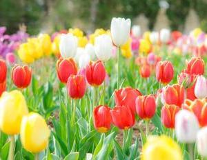 春よ、来い。