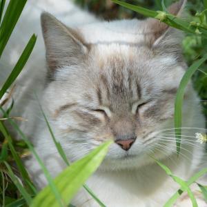 マンションにいる野良猫