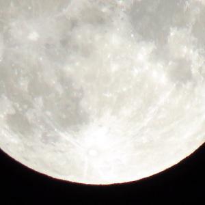 月見だんご♪