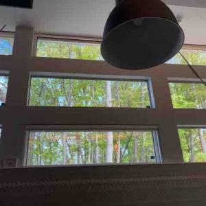 窓から新緑