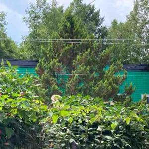 カラスからお庭を守る釣り糸