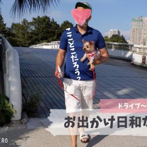 【今週末の過ごし方】シニア犬だけど、思い切り、好きなだけ散歩する!!!