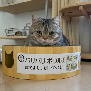 愛猫のお気に入りの段ボールベッド バリバリボウル