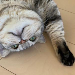 ネコが楽しく快適に暮らせるように。