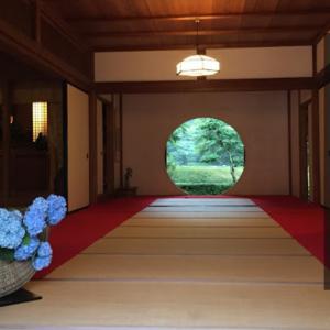 【明月院】雨の北鎌倉 あじさいでら #70