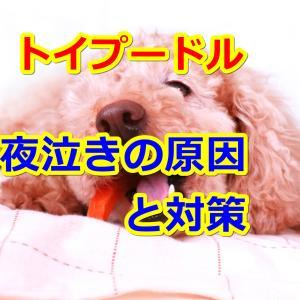 子犬トイプードルの夜泣きの原因と対策方法