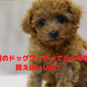 トイプードルの子犬用のドッグフードの選び方とは?