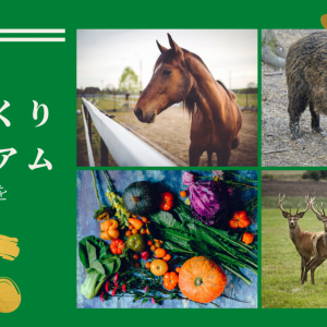 【ドッグフードの口コミ】馬肉自然づくりプレミアムの評判と口コミをまとめてみた!