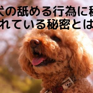 犬が顔を舐める理由って知ってる?理由や舐める行為をやめさせる方法について