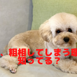 犬が畳におしっこを粗相する理由とは?対処法について
