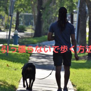 トイプードルのお散歩。リードを引っ張る理由と引っ張り癖の直し方。