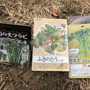 山菜を育てる