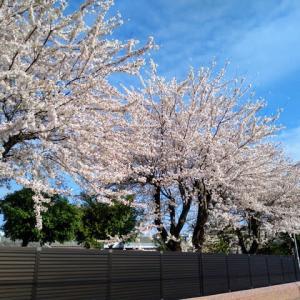 暦だけ早春〜高滝湖