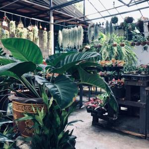 ⚫︎「BAICHA Coffee」観葉植物店が運営するカフェ