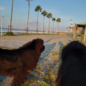 沖縄に行きたい!