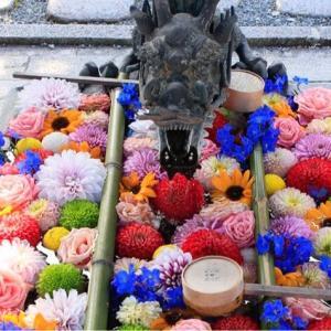 【おでかけ】花手水の先駆け柳谷観音・楊谷寺へゴーゴゴー!@長岡京市