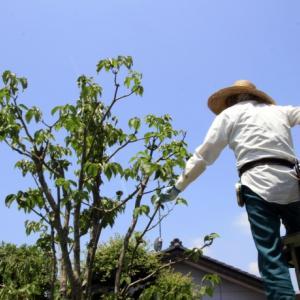 庭木を剪定する時期は?一覧表付き【手が届く所ならDIYもOK】
