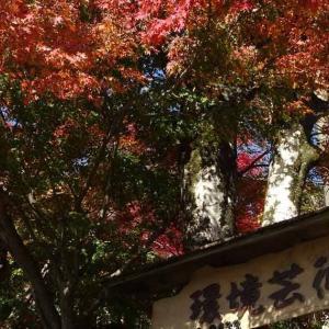 「環境芸術の森」の紅葉 佐賀県唐津市