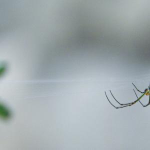 クモに話しかけたりする[言霊実験36]