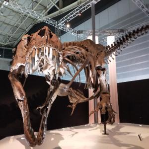 7月17日~9月12日まで!パシフィコ横浜開催中の【恐竜科学博】に行きました!小坂菜緒ちゃん推しの自分が行った結果、最高すぎました。。