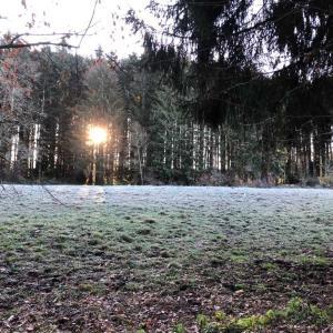 もうすっかり冬なスイスの田舎。