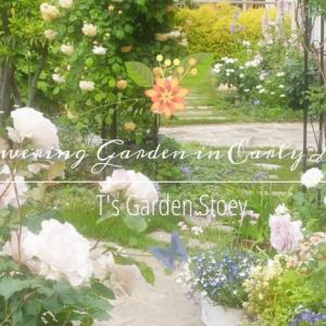 《5月上旬の庭》たくさんの花が咲き誇る幸せいっぱいの庭