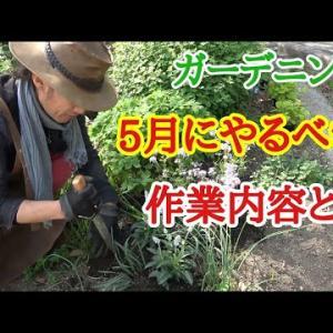 春にやるべきお庭の作業【ガーデニング】