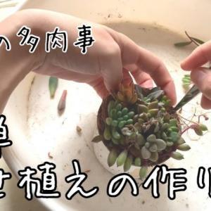 多肉植物寄せ植えの作り方