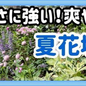 暑さに強い宿根草/バラが育たない花壇の原因と対策・土壌改良・半地植え