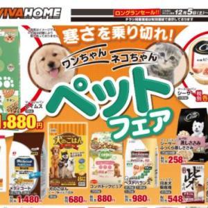 安全な犬の寒さ対策~【寒さを乗り切れ!】
