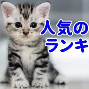 【かわいい猫】日本で人気の猫種ランキングTOP10!