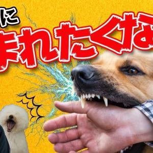 愛犬に噛まれたくない飼い主さんへ