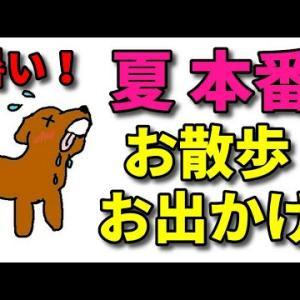 【犬 お出かけ】愛犬の夏の熱中症対策