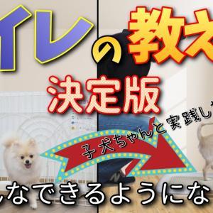 子犬のトイレトレーニング決定版!実践動画