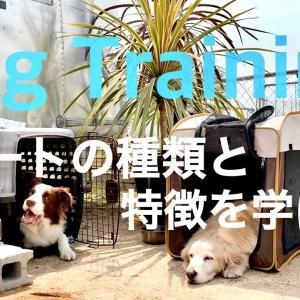 【犬のしつけ】犬用ハウス・クレートトレーニング!まずはハウスの種類を確認しよう!