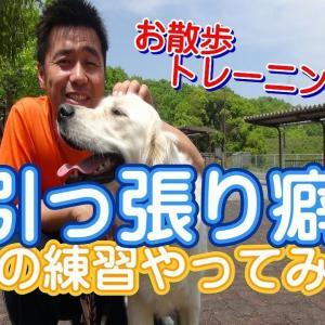 ~犬のしつけ・ドッグトレーニング~お散歩での引っ張り癖の練習方法