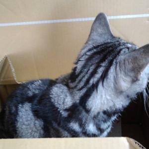 箱入りおネコ