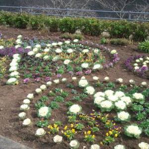 クエスト:花壇への植栽