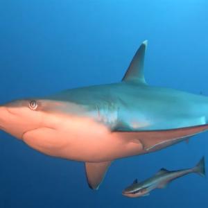 「危ない!」突進してきたサメをグーパンチで危機回避