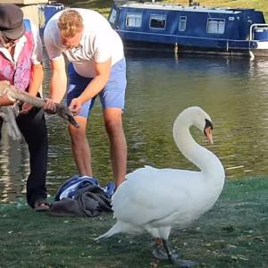 くちばしに釣り糸とフックが絡まっていた白鳥を救助!