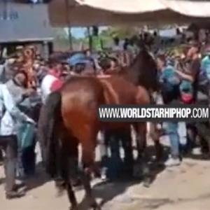 馬の後ろ蹴りを喰らった女性、アゴ砕かれる