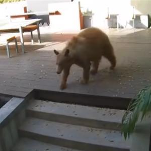 【イッヌ】家の中に侵入してきた巨大な熊を撃退する勇敢ワンコ!