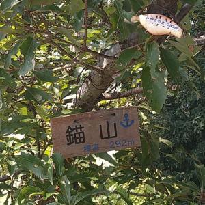 近くの山はただものではなかったです。(新神戸〜瀧山城跡〜錨山〜山本通)