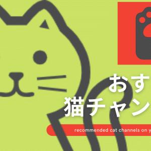 【あなたのイチオシは?】おすすめyoutube猫チャンネル