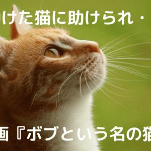 【助けた猫に助けられた話】映画『ボブという名の猫』