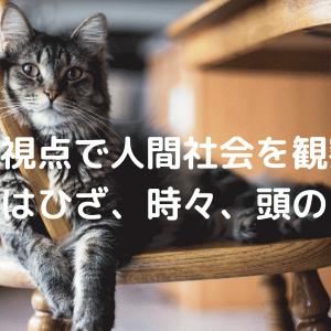 猫の目線で人間世界を観察できる『同居人はひざ、時々、頭のうえ。』
