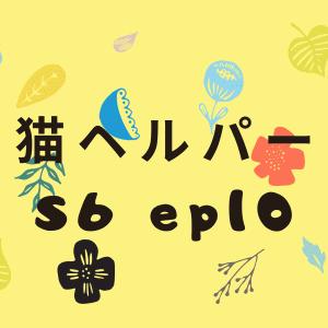 『猫ヘルパー』S6ep10見どころ紹介